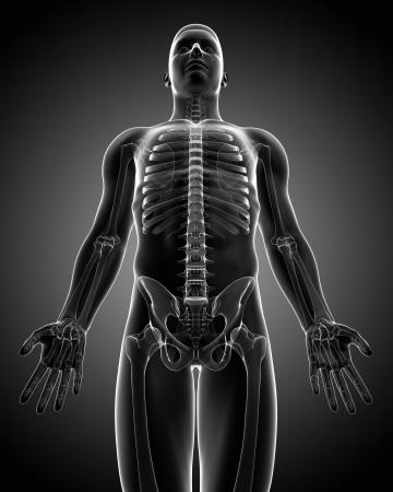 crash-kurs medizin des menschlichen körpers