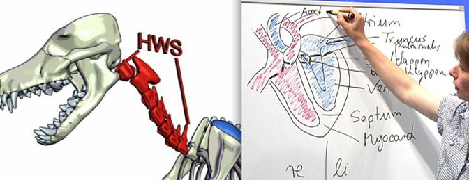 Neu: Anatomie und Physiologie bei Hund, Pferd und Katze