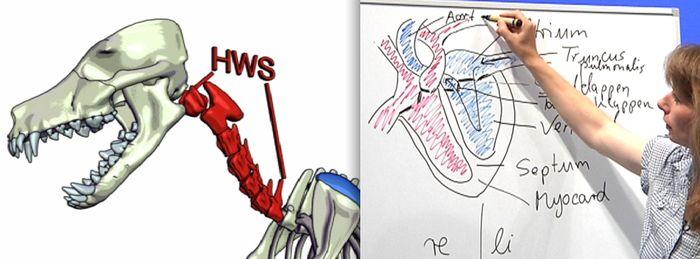 Anatomie Physiologie Hund Katze Pferd