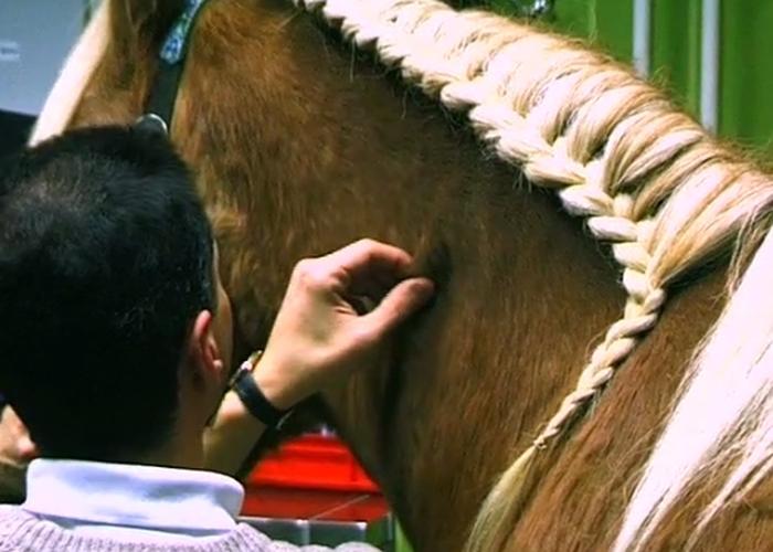 Hautfalten-Palpation Pferd