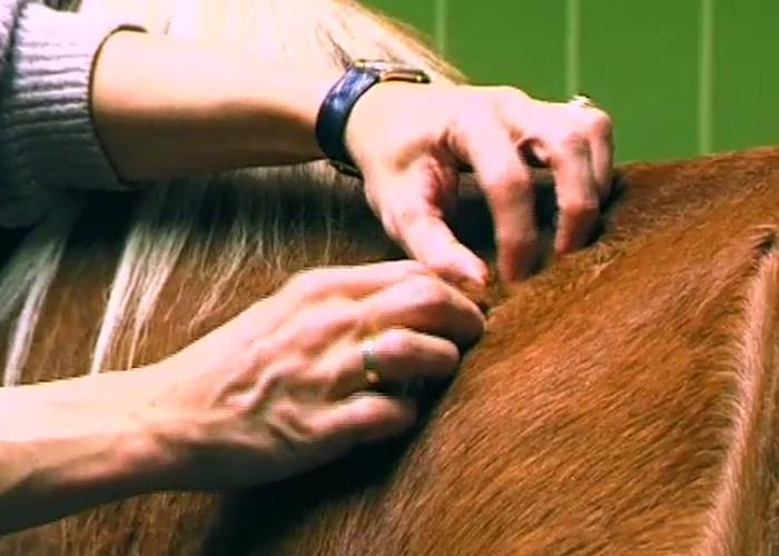 Palpation Pferd Kiblersche Hautfalte