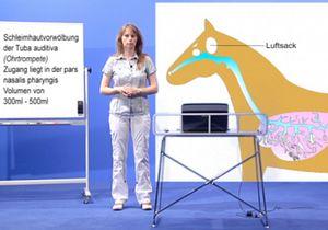 Anatomie Hund, Katze, Pferd