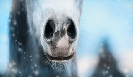 Das Sinushaar bei Hund, Katze und Pferd