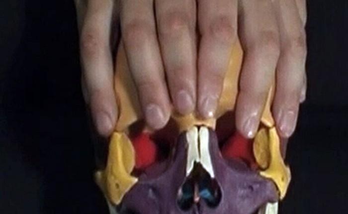 Os frontale - Kraniosakrale Osteopathie