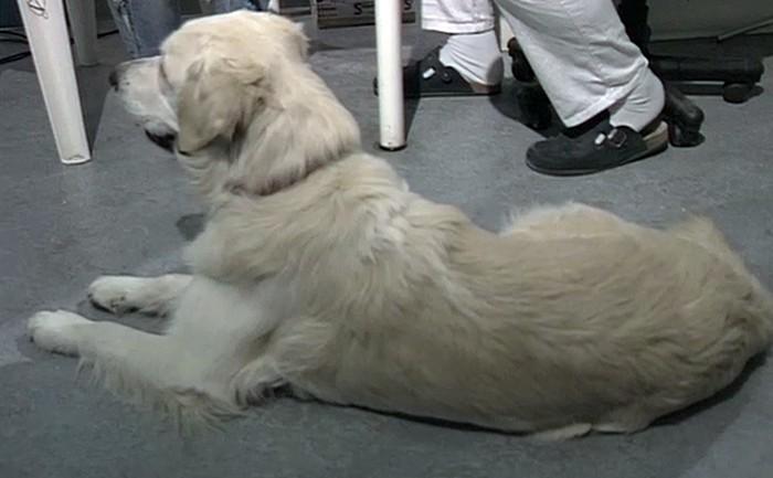 Anamnese Hund