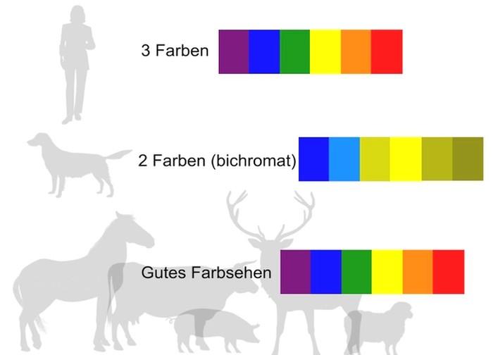 Farbsehen bei Mensch, Hund und Pferd