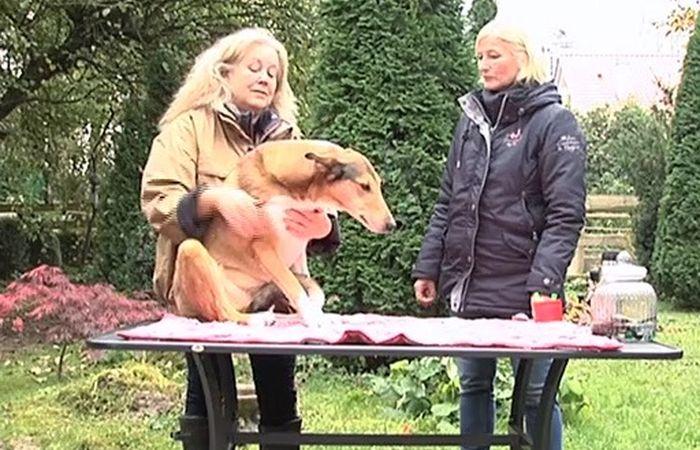 Blutegelbehandlung beim Hund