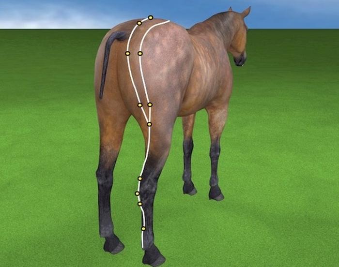 Druckpunktmassage Pferd