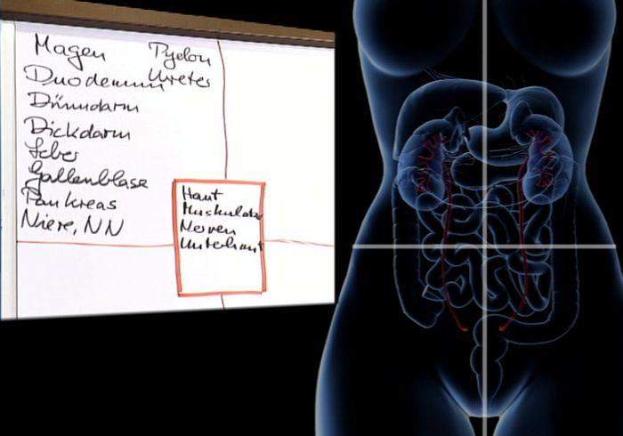 Quadranteneinteilung Bauchoberfläche