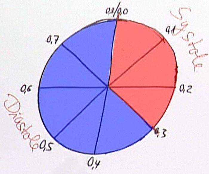 Herzzyklus, Systole, Diastole