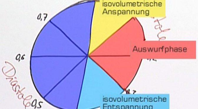 Die vier Phasen des Herzzyklus