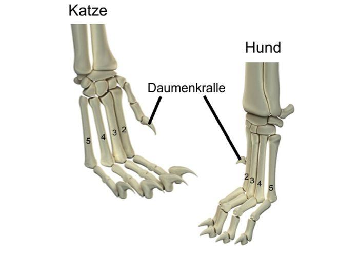Knochenstrukturen Katze Hund