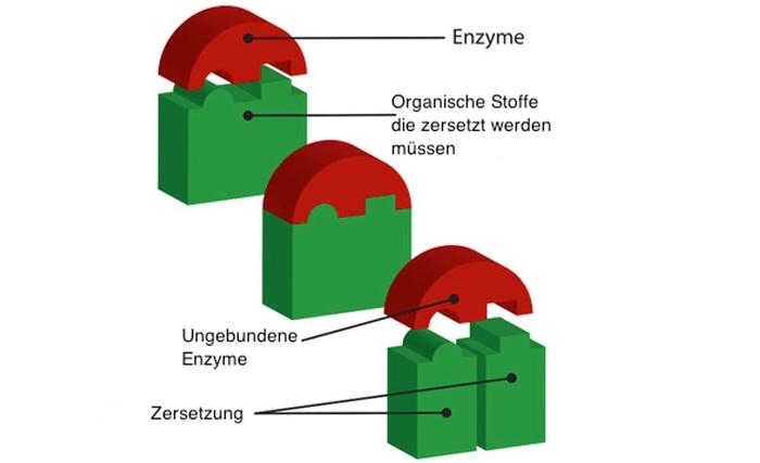 Wirkungsweise von Enzymen