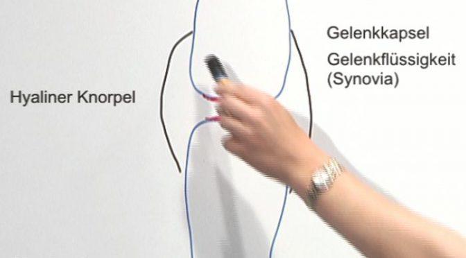Die Verbindungen zwischen Knochen erklärt