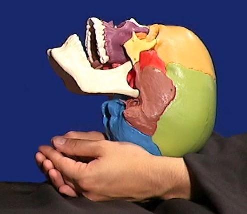 C4-Technik in der Kraniosakralen Osteopathie