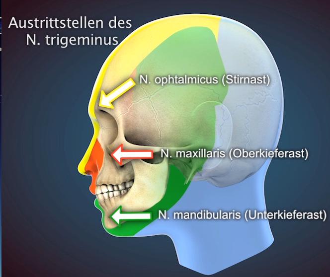 kiefergelenks nervus trigeminus